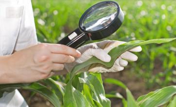 Programas de boas práticas agrícolas: MIP, controle biológico, etc