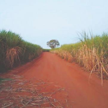 Novidades sobre bioinsumos no Brasil