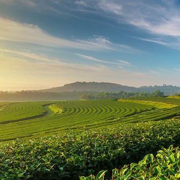Quem são os embaixadores do agronegócio? Conheça o trabalho dos adidos agrícolas