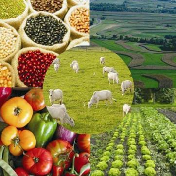 Artigo - Sustentabilidade na agricultura